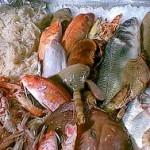 pesce-1ok