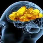 omega3efunzioni-cognitive